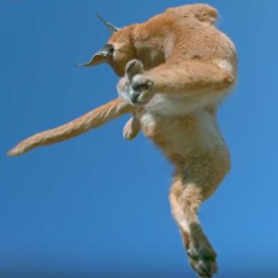 chat-qui-retombe-sur-ses-pattes-2